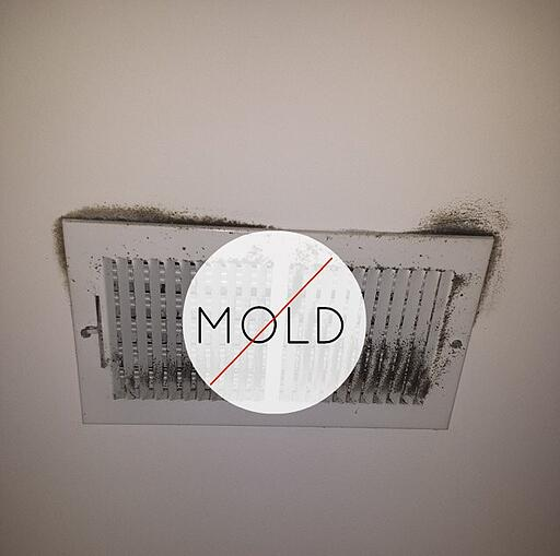 Mold In Apartment: Property Management Take Action Against Mold