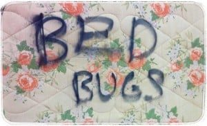 Bed Bug Bed in San Francisco